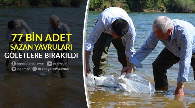 77 Bin Adet Pullu Sazan Yavruları Göletlere Bırakıldı