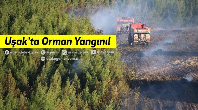 Uşak'ta Orman Yangını!