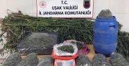 Uşak İl Jandarma Komutanlığı Ekiplerinden Uyuşturucu Operasyonu!