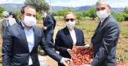 """Vali Funda Kocabıyık, """"Sivaslı'da çilek üretimini artırmayı hedefliyoruz"""""""